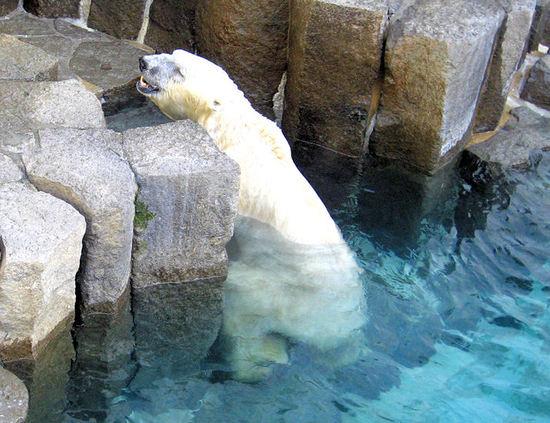 Polar20070809