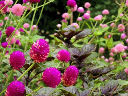 Flower20070913