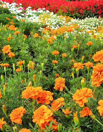 Flower200709132_4