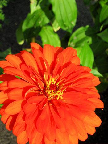 Flower200709133_2
