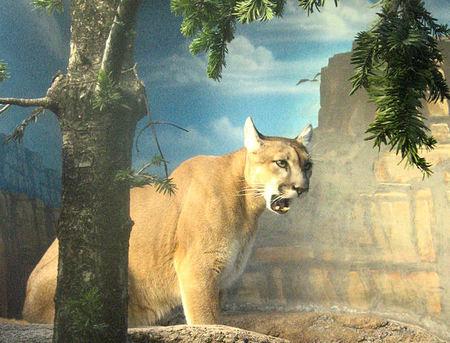 Puma20071016