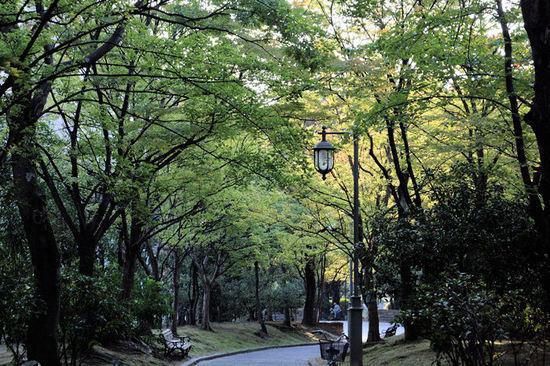 Ryokuti20071024