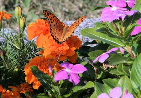 Butterfly20071024_2