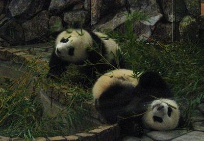 Panda200710301