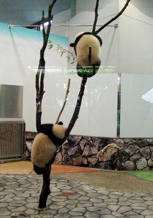 Panda200710302