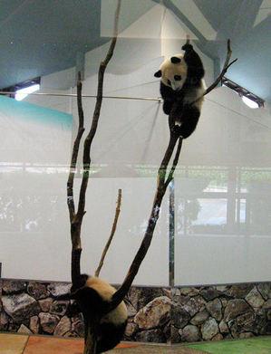 Panda200710303