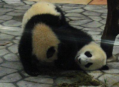 Panda200710304