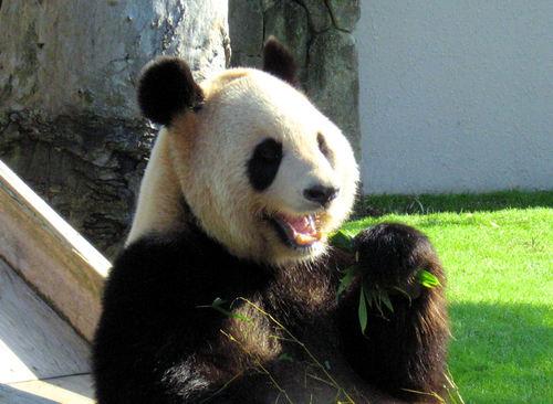 Panda200710291_2