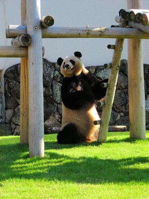 Panda200710292