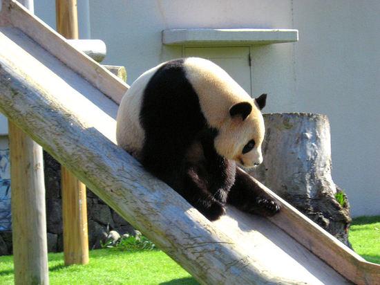 Panda200710293