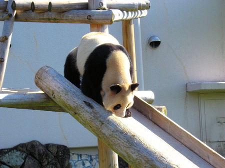 Panda200710294