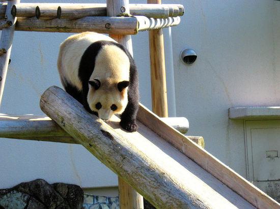 Panda200710295