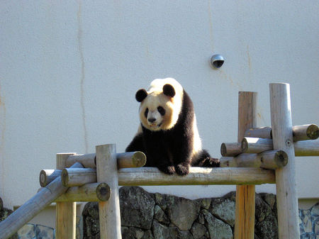 Panda200710296