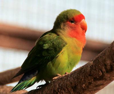 Bird20071117_2