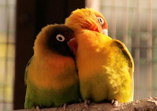 Birds20071117