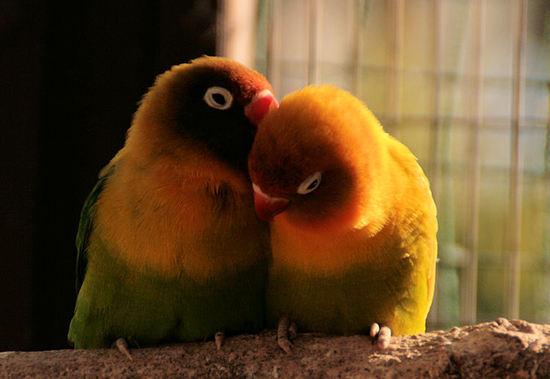 Birds200711171