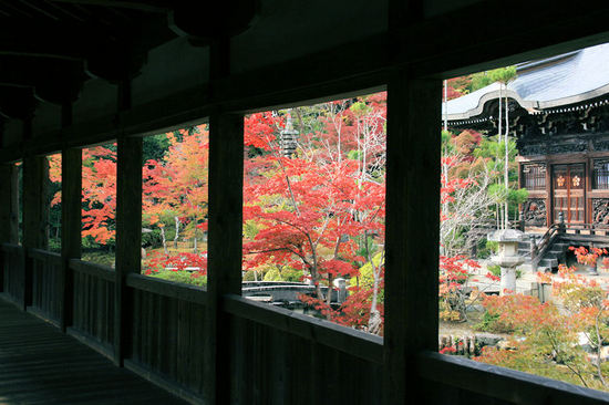 Seiryoji20071119