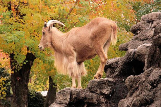 Sheep200711291_2