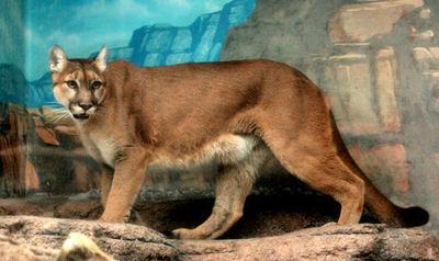 Puma200711291
