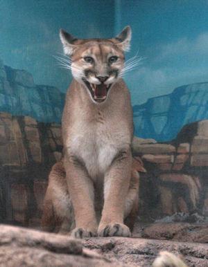 Puma200711292