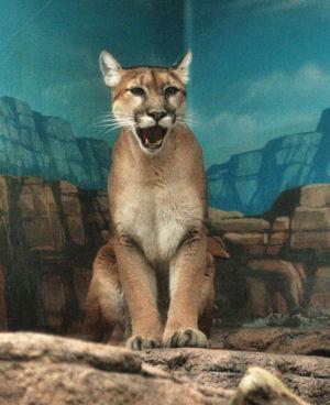 Puma200711293