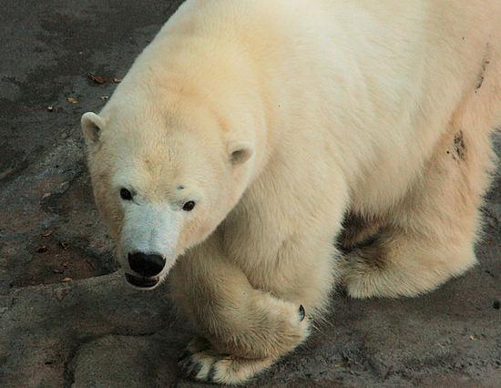 Polar20071206