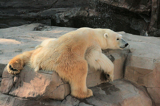 Polar200712062