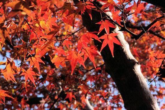 Kyoto20071210_2