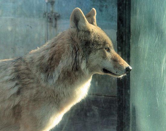 Wolf200712201