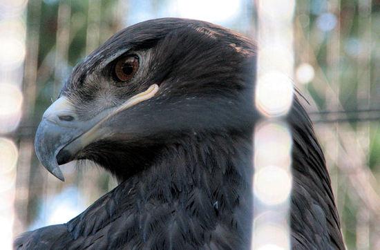Eagle20080228