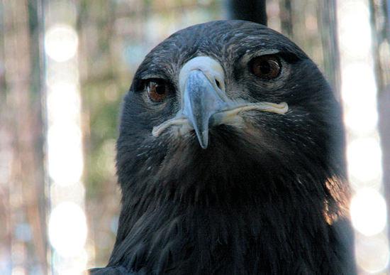 Eagle200802281
