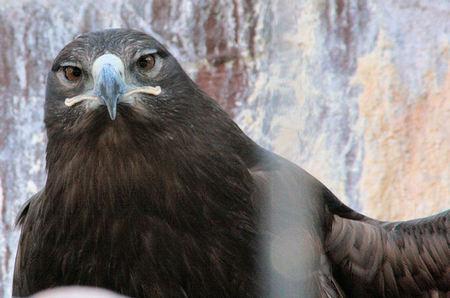 Eagle200802282
