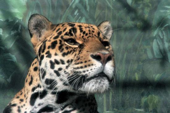 Jaguar2008022811