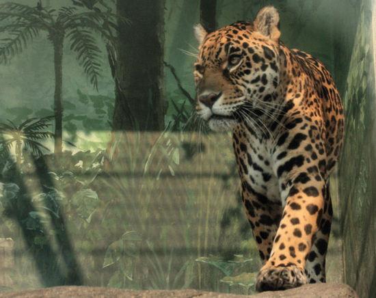 Jaguar2008030611