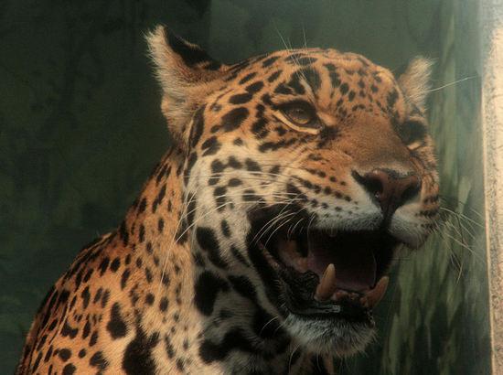 Jaguar2008030612