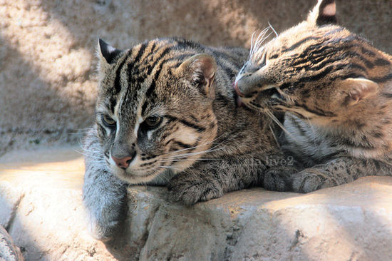 Fishingcat200804151_2