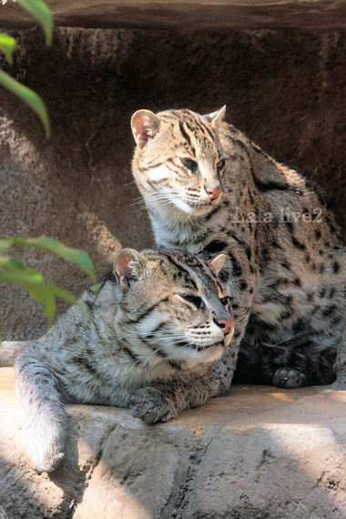 Fishingcat200804153_2