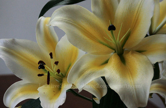 Lily200804191