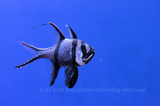 Fish20080411
