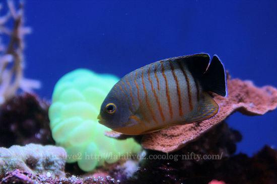 Fish200804111