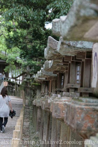 Kasuga200805045