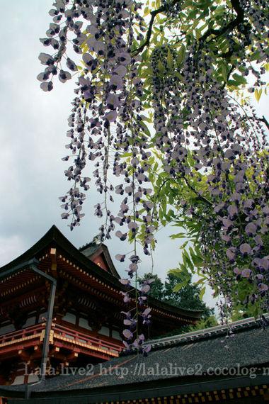 Kasuga200805049_2