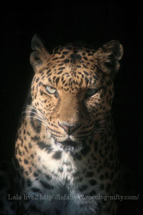 Leo200805151_2