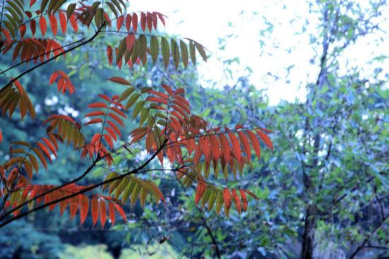 Autumn200811051