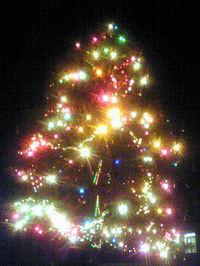 Tree20081223