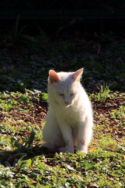 Cat20081219
