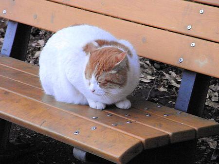 Cat20081224_2