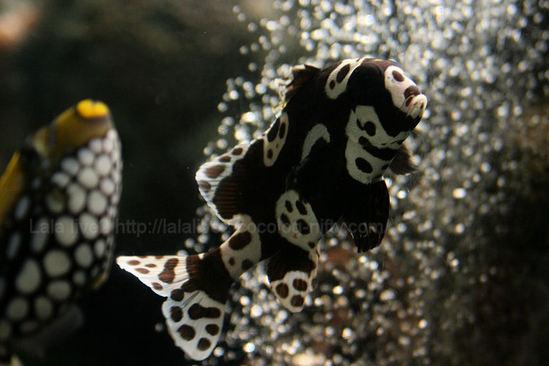 Fish200902241