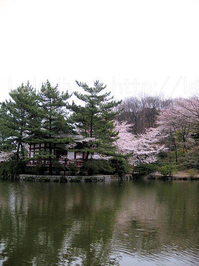Sakura200904041