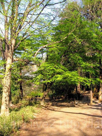 Park20090409